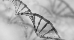 What is longer: a map of your DNA or the paper trail generated to produce it? Featured Image
